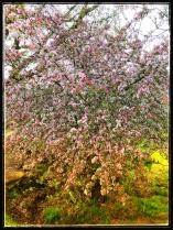Groningen in bloei