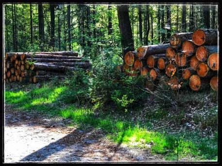 En jawel, de spelletjes kloppen; in wouden is er bomenkap