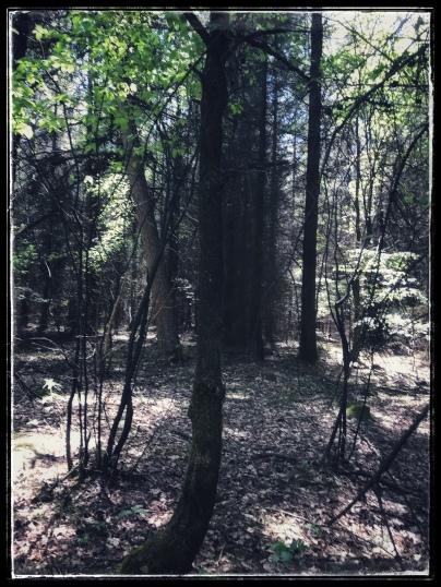 Het lijkt alsof in dit bos diverse bomen zijn ingepakt in netten. Dit is gezichtsbedrog; het is echt een zon en schaduwspel